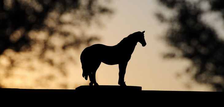 RBA rate cut is the dark horse on Melbourne Day